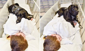 Boys Loyal Dog Refused To Let Him Go Into Surgery Alone