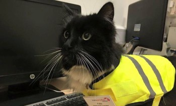This Cat That Works At A Train Station Just Got A Big Promotion