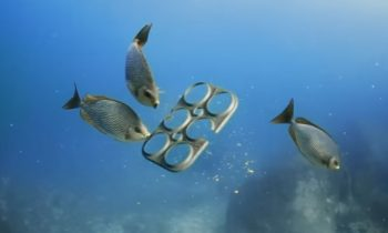 Florida Brewery Creates Biodegradable 6-Pack Rings That Can Be Eaten By Wildlife