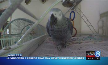 Meet Bud: Parrot, possible murder witness