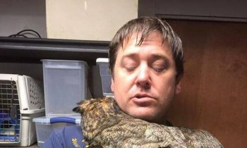 This Owl Cant Stop Hugging The Man Who Rescued Her