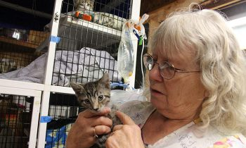 No-Kill Cat Rescue Owner Makes Repeat Trip Into Smoke-Filled Building And Saves Nearly 20 Cats