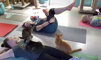 Cat Yoga Is A Bit Hit At This Rescue Shelter In Georgia