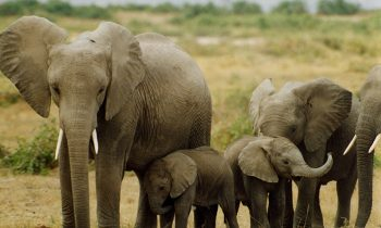 China – The Worlds Largest Ivory Market – Bans All Ivory Trading And Processing