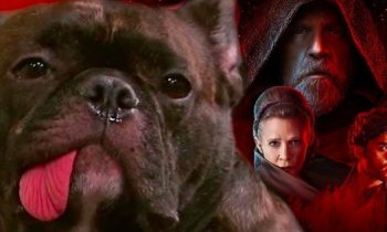 Carrie Fisher's Dog Watching Star Wars 8 Trailer Will Break Your Heart