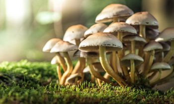 Magic Mushrooms Can Reset The Brains Of People With Depression