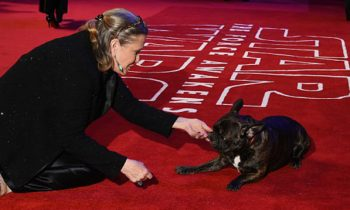 Carrie Fisherand#039;s Dog Attended The Premier Of and#039;The Last Jediand#039; To Watch Momand#039;s Final Film