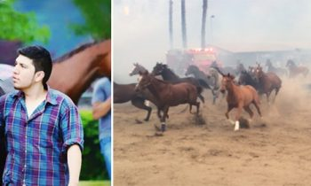 Dramatic Footage Shows Man Risking His Life To Help Horses Escape From Wildfires