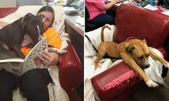 This Animal Shelter Gives Their Rescue Dogs Big Comfy Chairs So They Feel At Home
