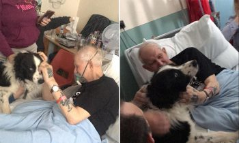 Nurses Break The Rules And Allow A Dying Man To See His Beloved Dog Before He Passed Away