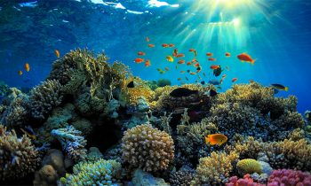 Australia To Spend $500 Million To Restore And Protect The Great Barrier Reef