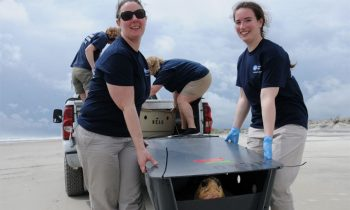 New England Aquarium Releases 14 Rescued Sea Turtles Back Into The Ocean