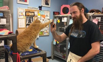 Animal Shelters Are Teaching Cats How To and#039;High Fiveand#039; To Make Them More Attractive For Adoption