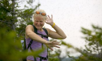 Study Says Mosquitoes Learn From Being Swatted At