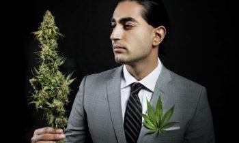 Manamorphosis: Shedding Cannabis' Sketchy Style