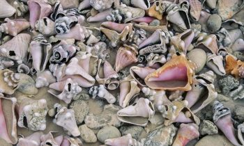 Florida Tourist Arrested And Sentenced To Jail For Collecting Seashells