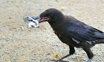 A Theme Park Trained Birds To Clean Up Trash