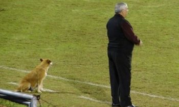 A Stray Dog Is The Assistant Coach Of A Professional Soccer Team