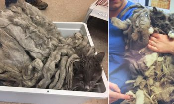 Severely Neglected Cat Dumped Off At A Shelter Finds A Loving Home